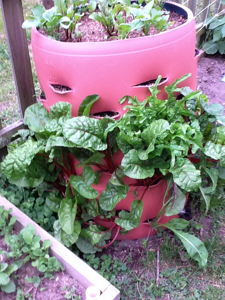 How to Make a Barrel Garden That Saves Space From Junk
