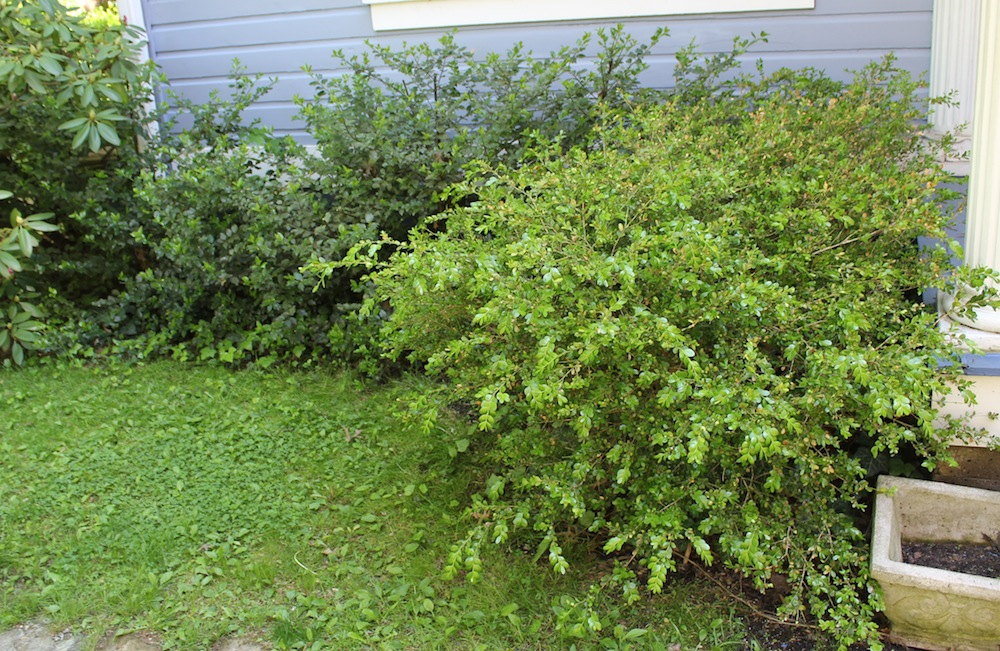 Spring Yard Care Tips What Your Yard Needs Right Now