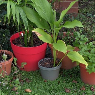 Growing Tropical Plants at Home – Five Essentials for Your Own Jungle Paradise