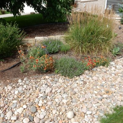 Laying Down the Lawn – A Sod Story with a Happy Ending