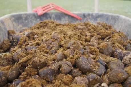 horse manure fertilizer