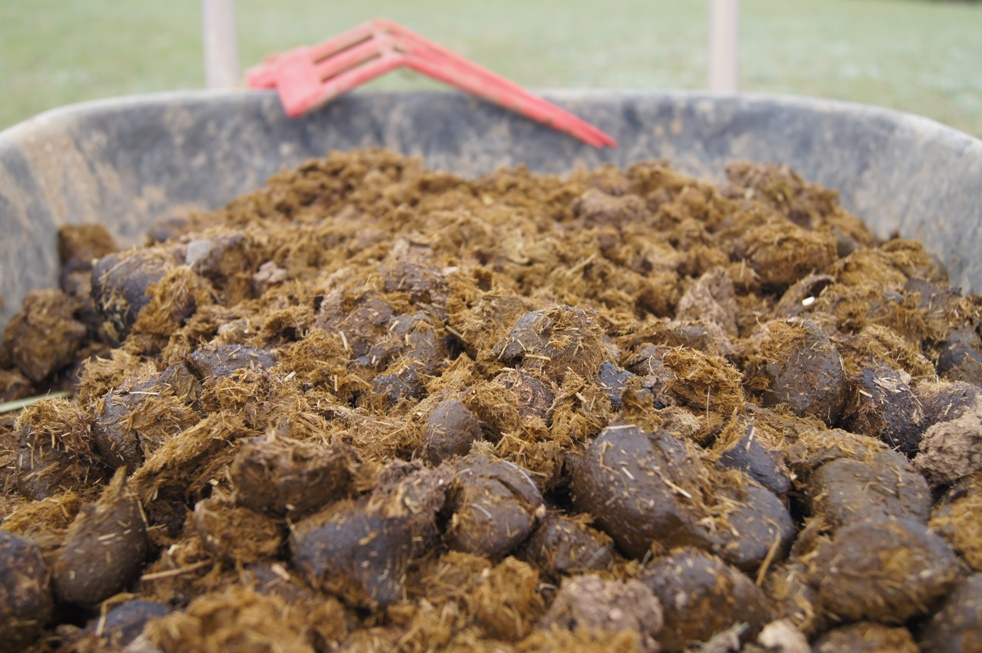 horse manure fertilizer