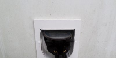 How to Install a Pet Door – A Tale of Two Kitties
