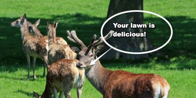 Identifying Common Garden Pests