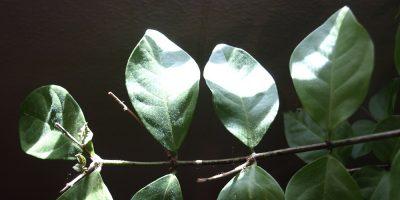 Overwintering Plants – Keeping Your Garden Happy
