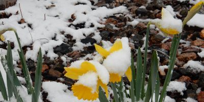 Mother Nature and HomeFixated Give Clues and Tips for Early Gardening