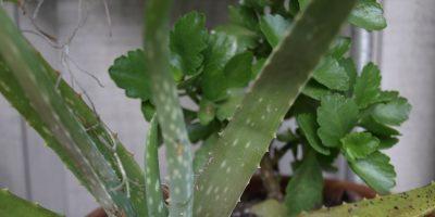 Heat Resistant Plants – Pansies Need Not Apply