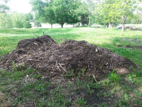 Wood chip mulch is plentiful, and often FREE!