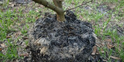It's Moving Time – How to Transplant Plants