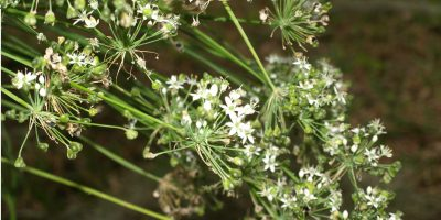 Herbs 101 – A Guide to Your Basic Culinary Varieties