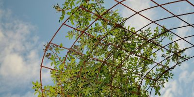 Trellis It Isn't So – Wood vs Metal Trellis Options and Tips