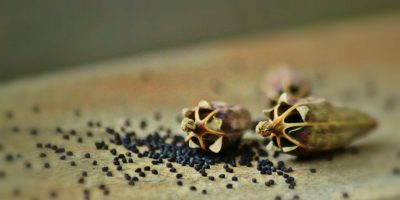 Nary a Bad Seed – 6 Seed Companies for Your Gardening Needs