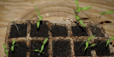 Starting Seedlings Outside and Get Your Garden Groove On!