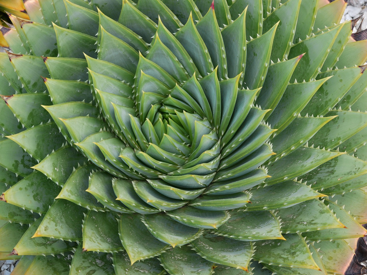 Image result for thorny plants