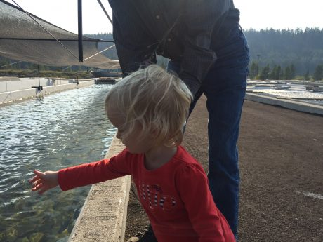Richard overseeing the feeding of baby trout at the fish hatchery with my youngest daughter