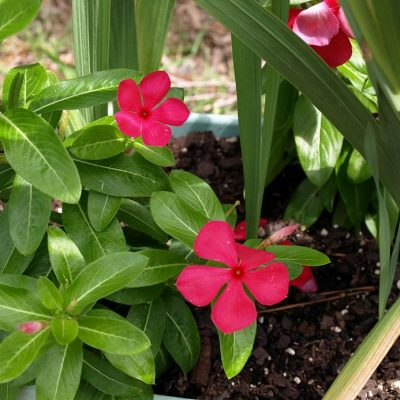 No Yard, No Problem! – Tips for Starting a Container Garden