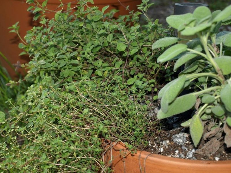 Planter brimming with healthy, lush plants: what its supposed to look like.
