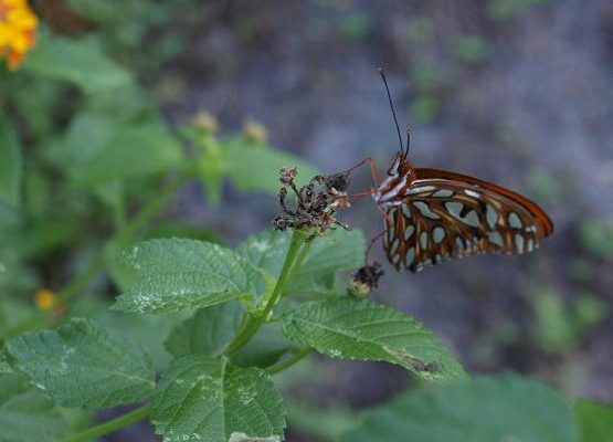 Calling All Butterflies – Attracting the Fly Guys