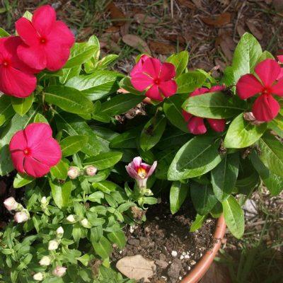 Easy Garden Maintenance – Looking Sharp with Minimal Effort