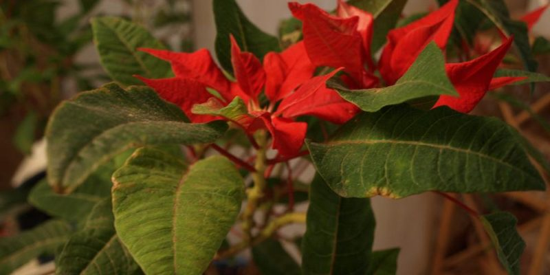 Keeping Houseplants Alive – A How To Guide