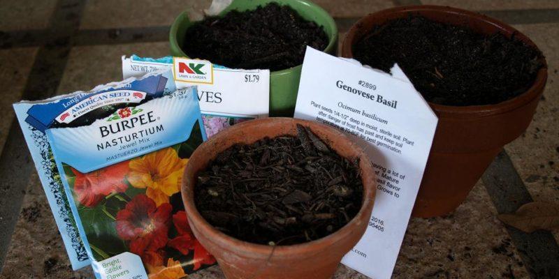 A Windowsill Herb Garden – Make It Yourself From Scratch