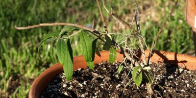Summer Gardening – How to Keep Summer from Killing Your Garden
