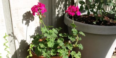 Growing Vegetables in Containers – Save Some Space