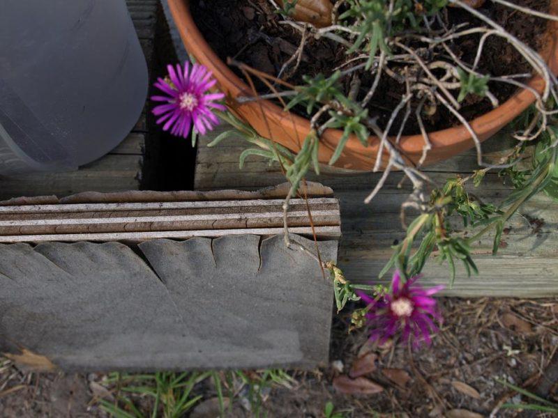 summer gardening - watering is key