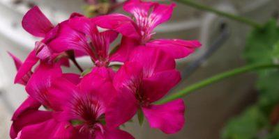 The Budget Friendly Garden – A Starter Guide