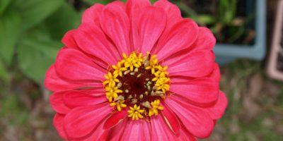 Affordable Garden Fertilizer and Potting Soils Options