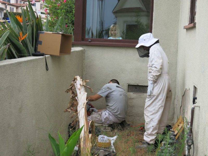 bee removal cutting into stucco