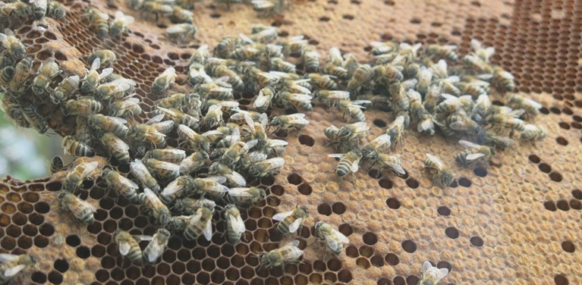 Adventures in Live Bee Removal - Don't be a Serial Buzz Killer