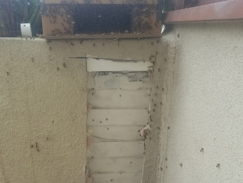live bee removal complete