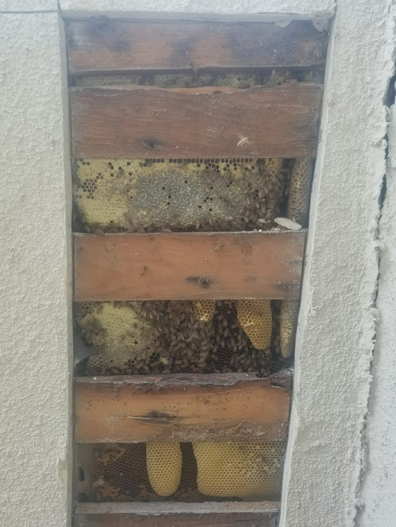 huge bee colony