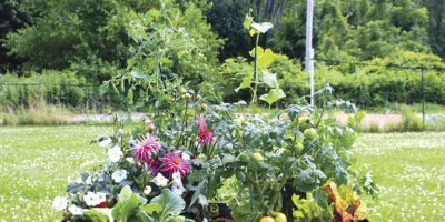 A Quick and Easy Fall Pop-Up Garden – This One is in the Grow Bag