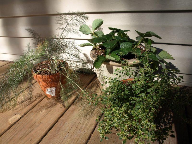 mini garden assortment