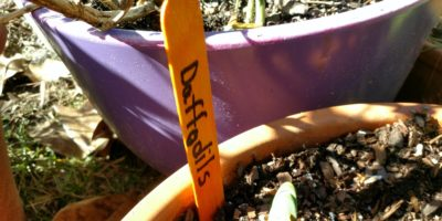 Basic Garden Markers – Tag Your Plants