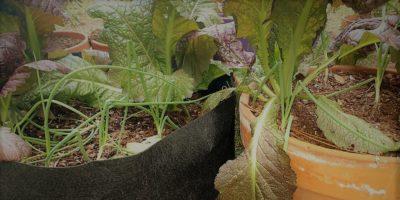 The Smart Pot – Adding Flexibility to Your Garden