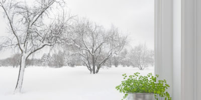 Winter Garden Survival Guide – How to Help Your Plants Stay Alive