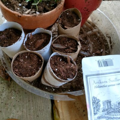 Glamorous Gardening Hacks – How to Start Seeds With Toilet Paper Rolls