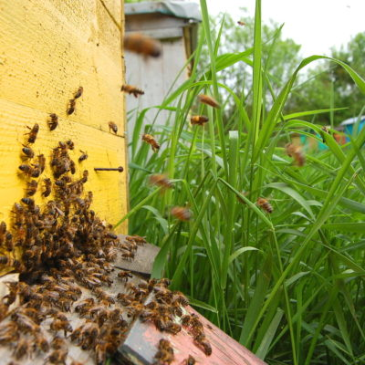 How to Get Started in Backyard Beekeeping in Five Easy Steps