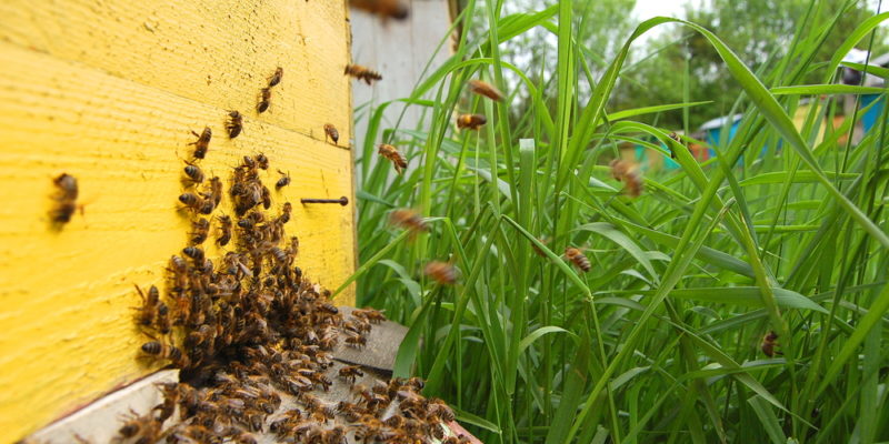 Backyard Beekeeping and How to Get Started - Home Fixated